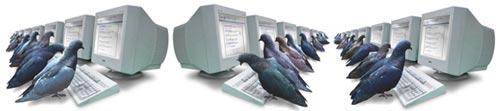pigeon system