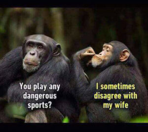 funny memes of June 2017