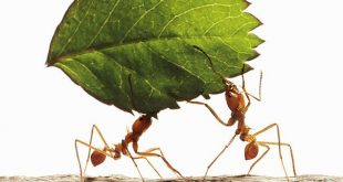 10 Unbelievable facts about ants you have never heard before