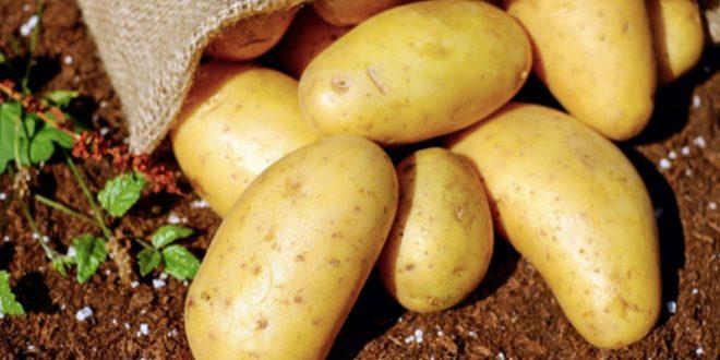 potato in anus